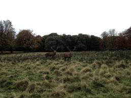 Nordic Walking in Tatton Park, Knutsford