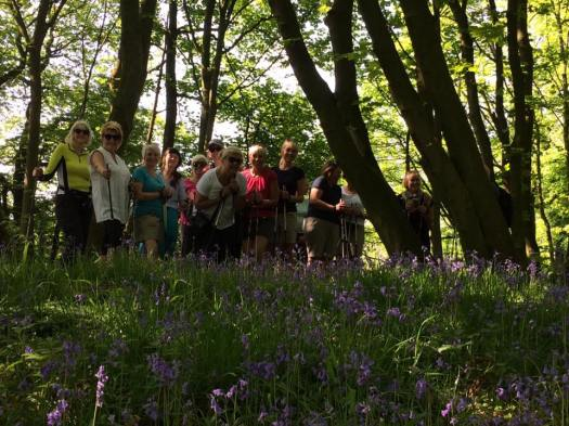 Bluebells group1
